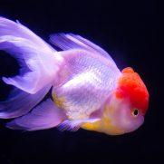 江戸川区金魚まつり 2017