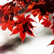 京都 紅葉 服装