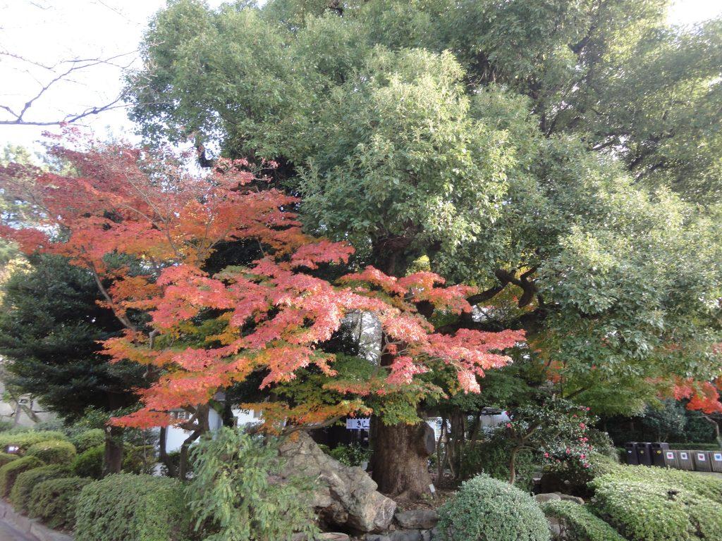 名古屋城 紅葉