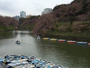 千鳥ヶ淵 ボート 桜