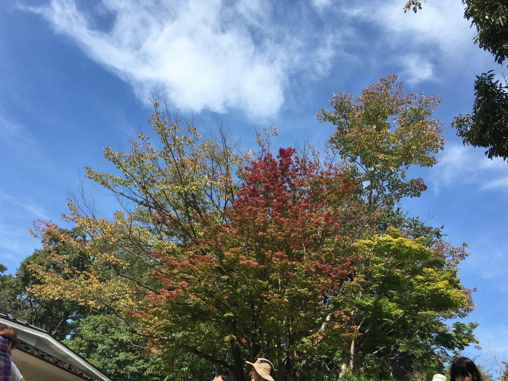 高尾山 10月 混雑