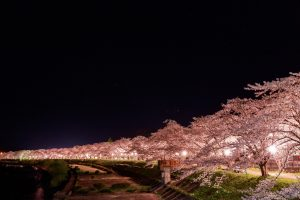 夜桜 デート 東京 大阪