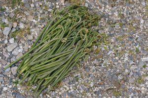 山菜採り 時期 服装 持ち物