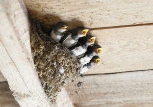 ツバメの巣 対策グッズ