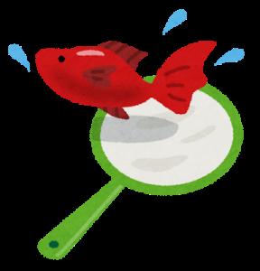 金魚とポイ