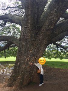 ハワイ 木 この木なんの木
